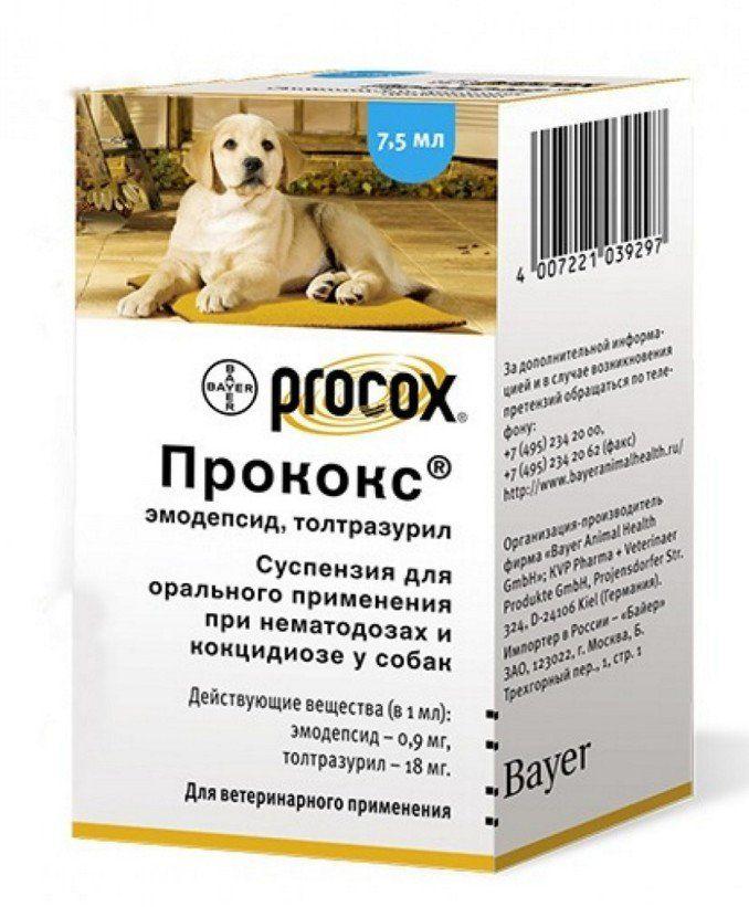 простейшие глисты у собак
